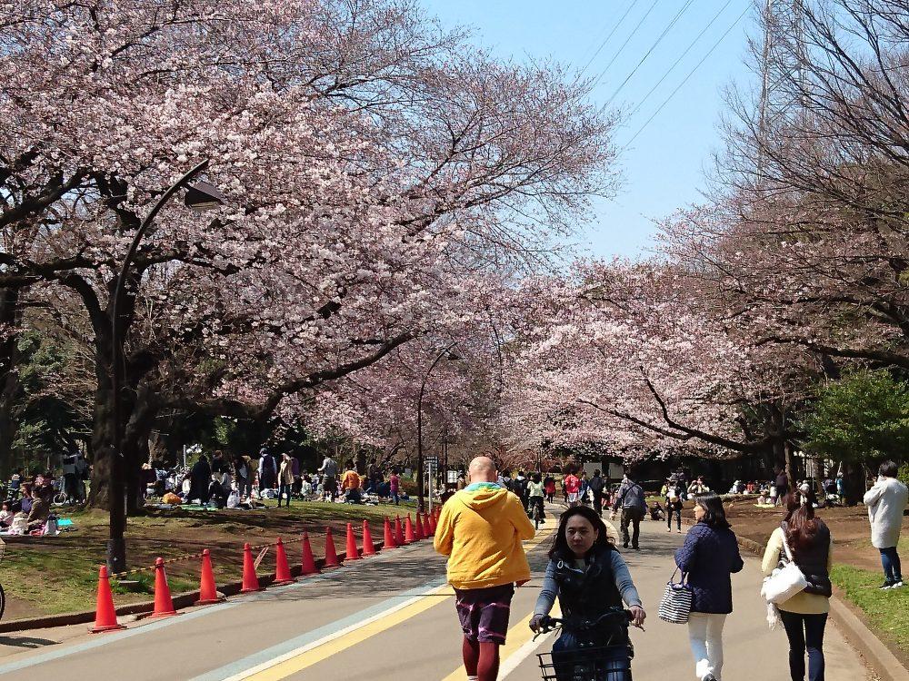 桜カラー☆