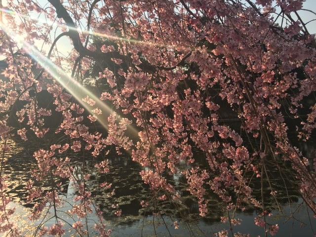 春はSAKURAカラーで!!