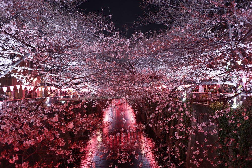 桜  ショートが得意なRENJISHI  です